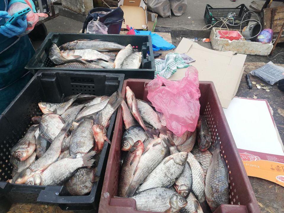 На київському ринку виявили майже 200 кг риби без жодних документів -  - 90088491 2840770682666105 3609701561661390848 o