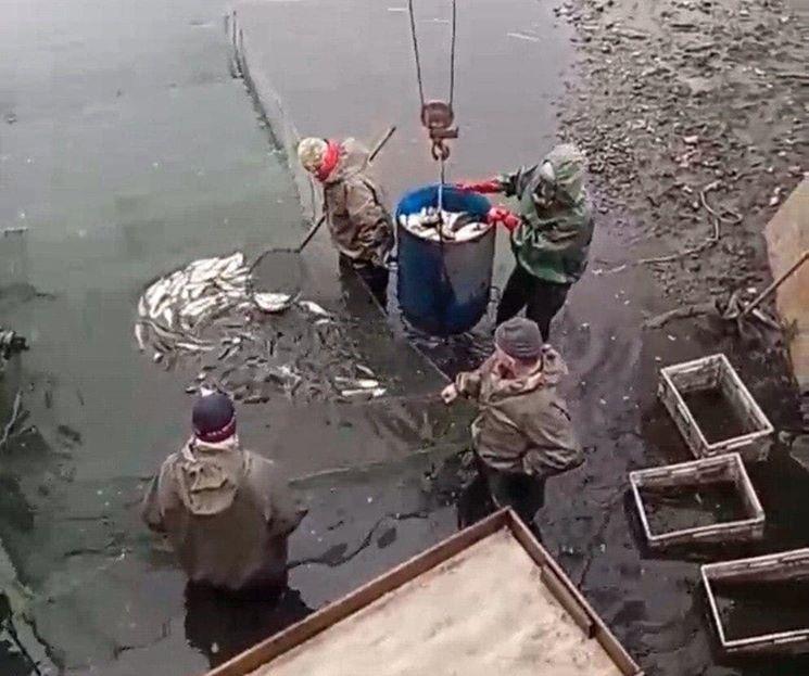 На Білоцерківщині та Кагарличчині зарибили водойми - Кагарлицький район, зариблення водойм, Білоцерківський район - 91425160 2862275533848953 8219020855540187136 o