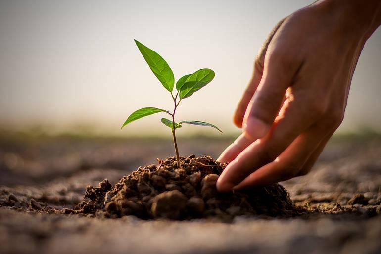 Фастівщина приєднається до акції «Відновлюємо ліси разом»: запрошують всіх охочих - Фастів - J1vdMa0YaU