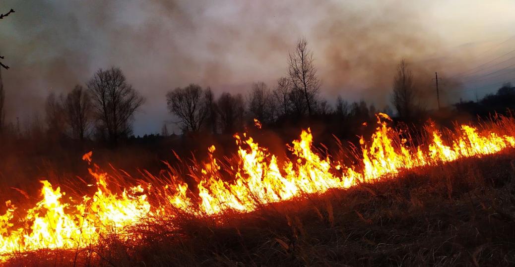 В екосистемах Київщини за добу сталося 150 пожеж на площі 215 га -  - Screenshot 17 4
