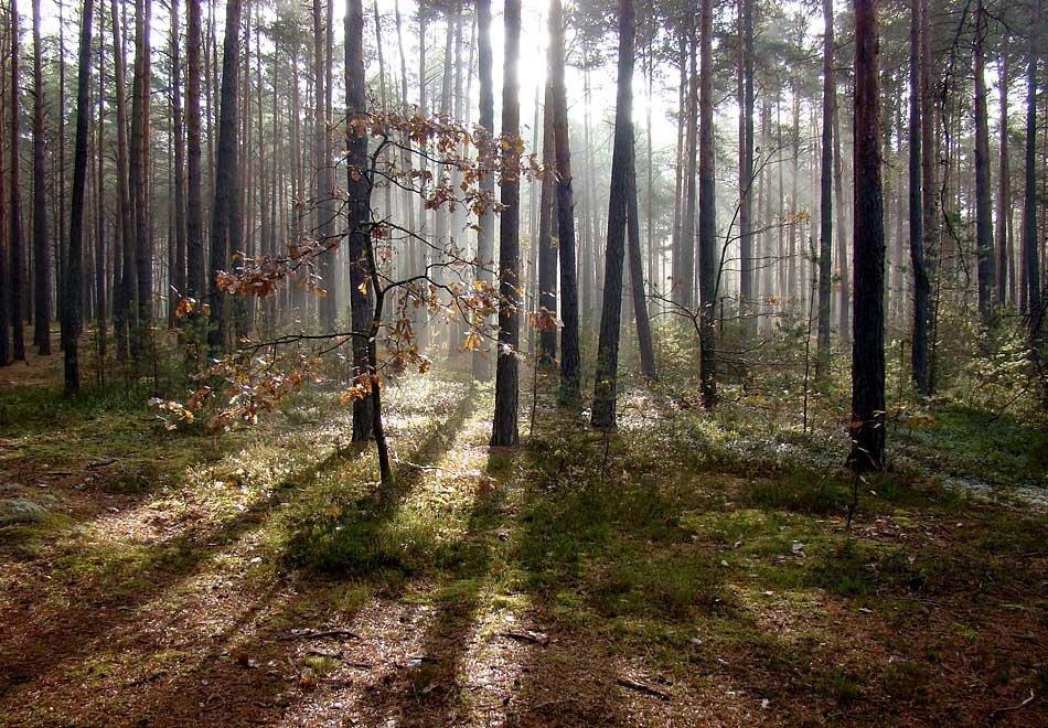 На Білоцерківщині у власність держави повернули майже 37 гектарів лісу - прокуратура Київщини - ik