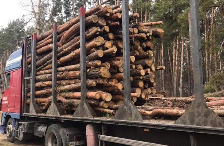 На Вишгородщині люди зафіксували вивезення немаркованого лісу - Поліція, київщина, Димер, Вишгородський район - lis1 ob
