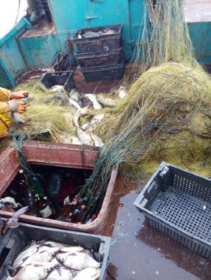 На Вишгородщині рибалка розкинув сітки майже на два кілометри - Сухолуччя, київщина, Київський рибоохоронний патруль, Вишгородський район, браконьєри - sitkym