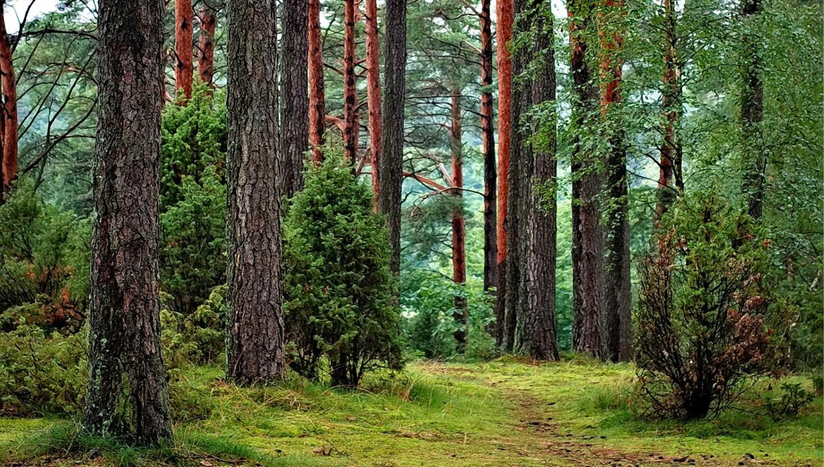 Обласна прокуратура через суд повернула державі 3 га лісу, що в межах  Обухівщини -  - trees in the forest