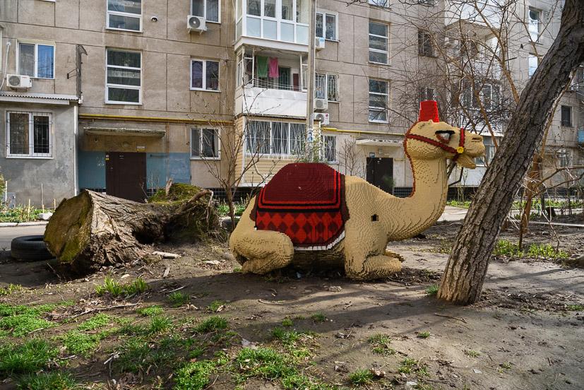 """В одеському дворі """"живе"""" власний верблюд та крокодил - Одеса - verblyud"""