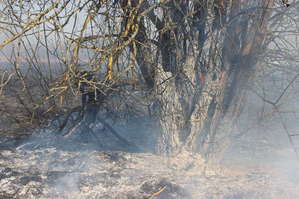 Боротьба з лісовими пожежами в зоні ЧАЕС (ФОТО) -  - 005