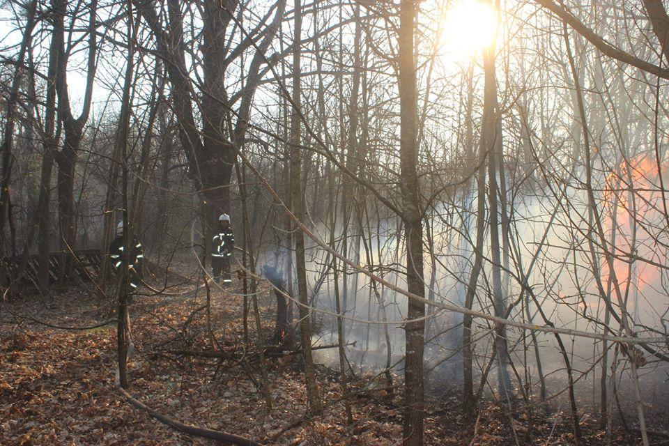 Боротьба з лісовими пожежами в зоні ЧАЕС (ФОТО) -  - 013