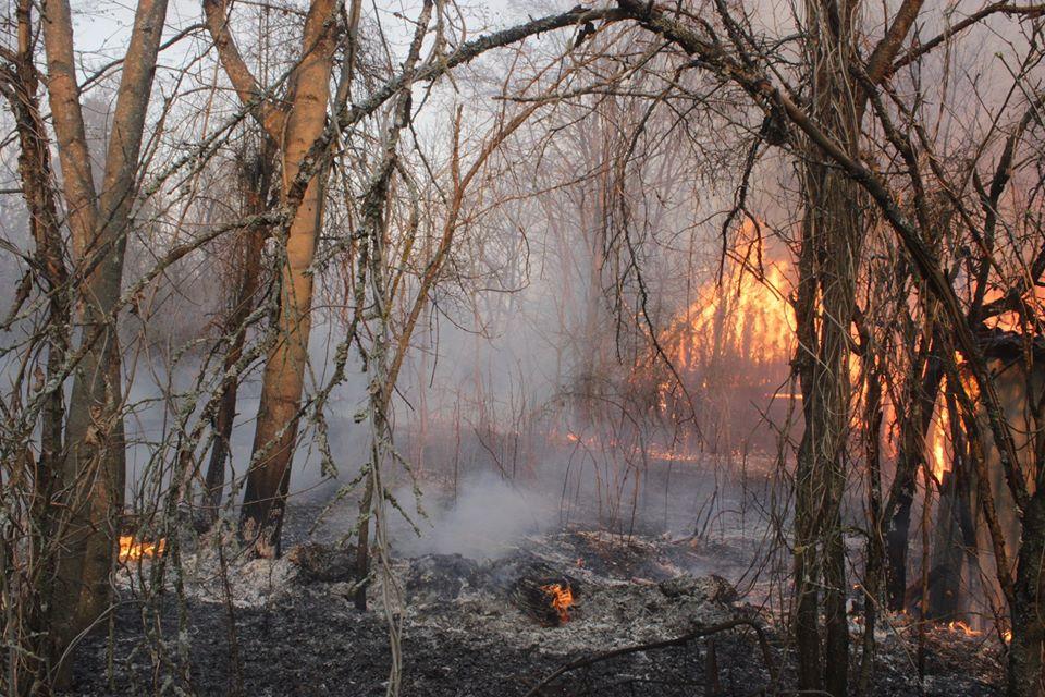 Боротьба з лісовими пожежами в зоні ЧАЕС (ФОТО) -  - 015