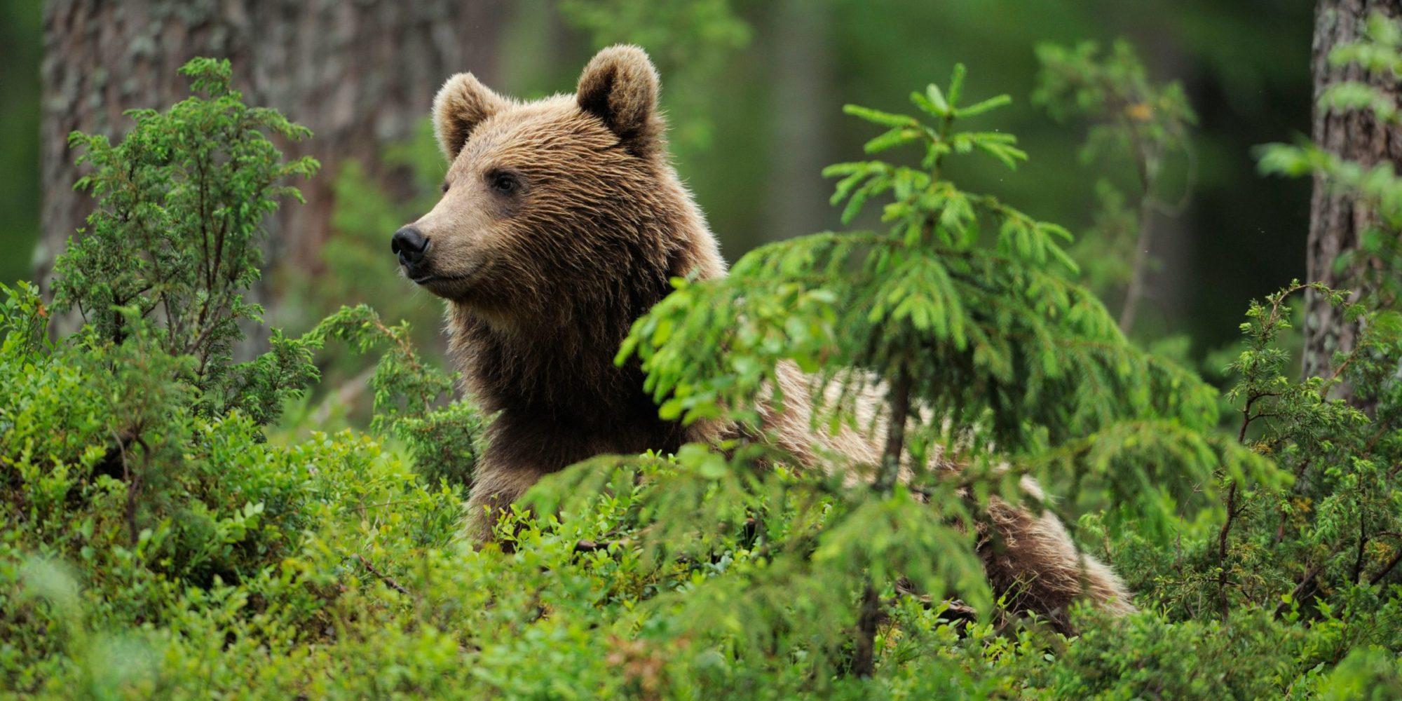 Від сьогодні в українських лісах розпочинається «сезон тиші» - ліс - 01 sezon 2000x1000