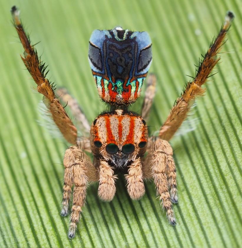 В Австралії знайшли павука, який виглядає як «Зоряна ніч» Ван Гога (ВІДЕО) - комахи - 01 zvezdnaya noch2