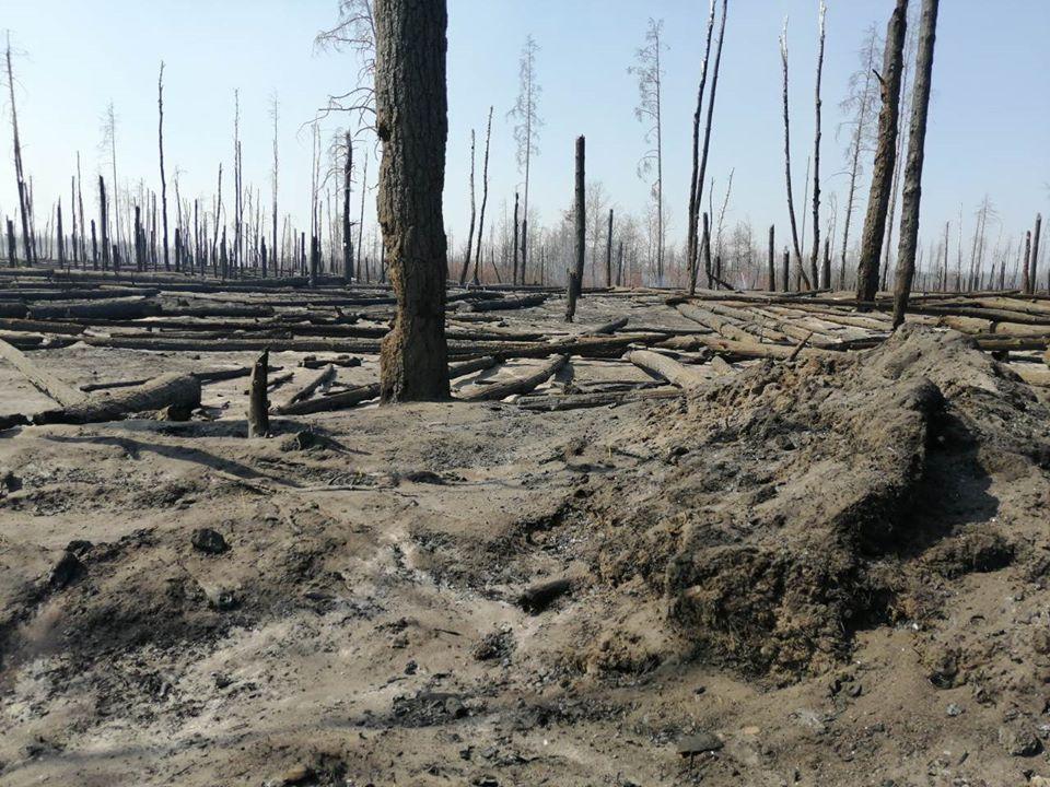 Боротьба з лісовими пожежами в зоні ЧАЕС (ФОТО) -  - 023