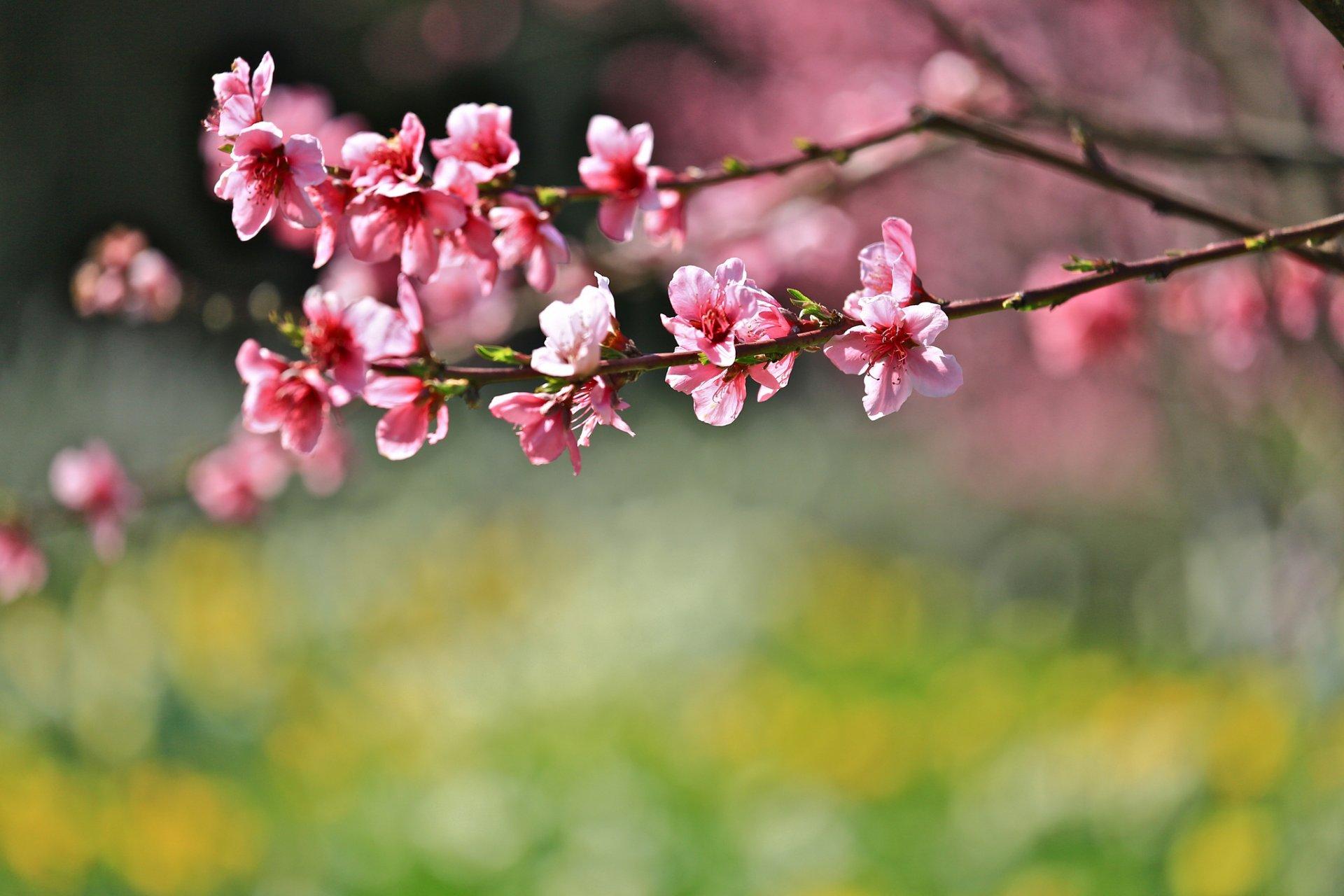 Нарешті тепло: 2 квітня на Київщині буде суха, переважно сонячна, погода - погода - 02 pogoda3
