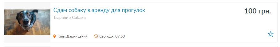 Новий «бізнес» під час карантину: українці здають в оренду собак для вигулу - карантин, вигул собак - 07 arenda