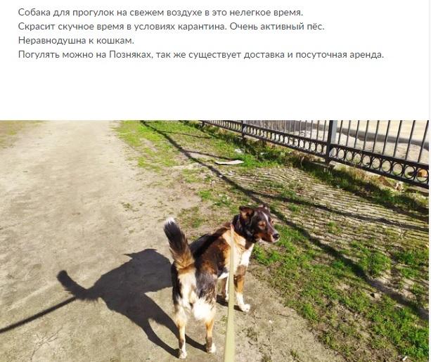 Новий «бізнес» під час карантину: українці здають в оренду собак для вигулу - карантин, вигул собак - 07 arenda2 1