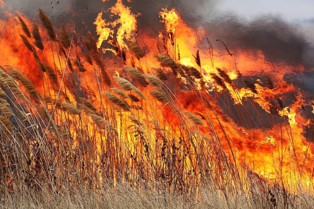 З початку року пожежі в Україні знищили майже 18 тис га екосистем - пожежі - 08 pozhezha