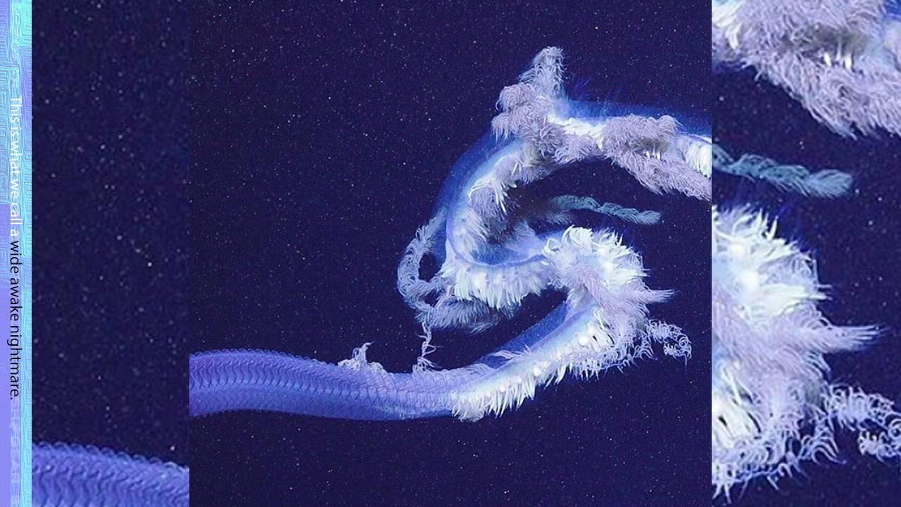 Дослідників шокувала величезна істота біля узбережжя Австралії: можливо це найдовша «тварина» у світі - Австралія - 09 avstralyya2