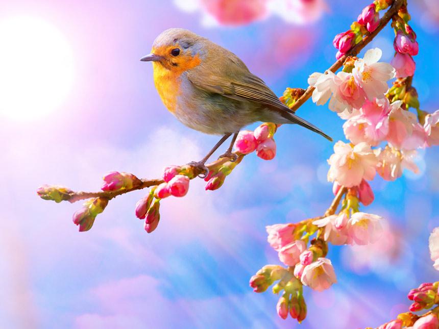 9 квітня на Київщині буде сонячно та тепло: погоду визначатиме антициклон Loris - прогноз погоди, погода - 09 pogoda3