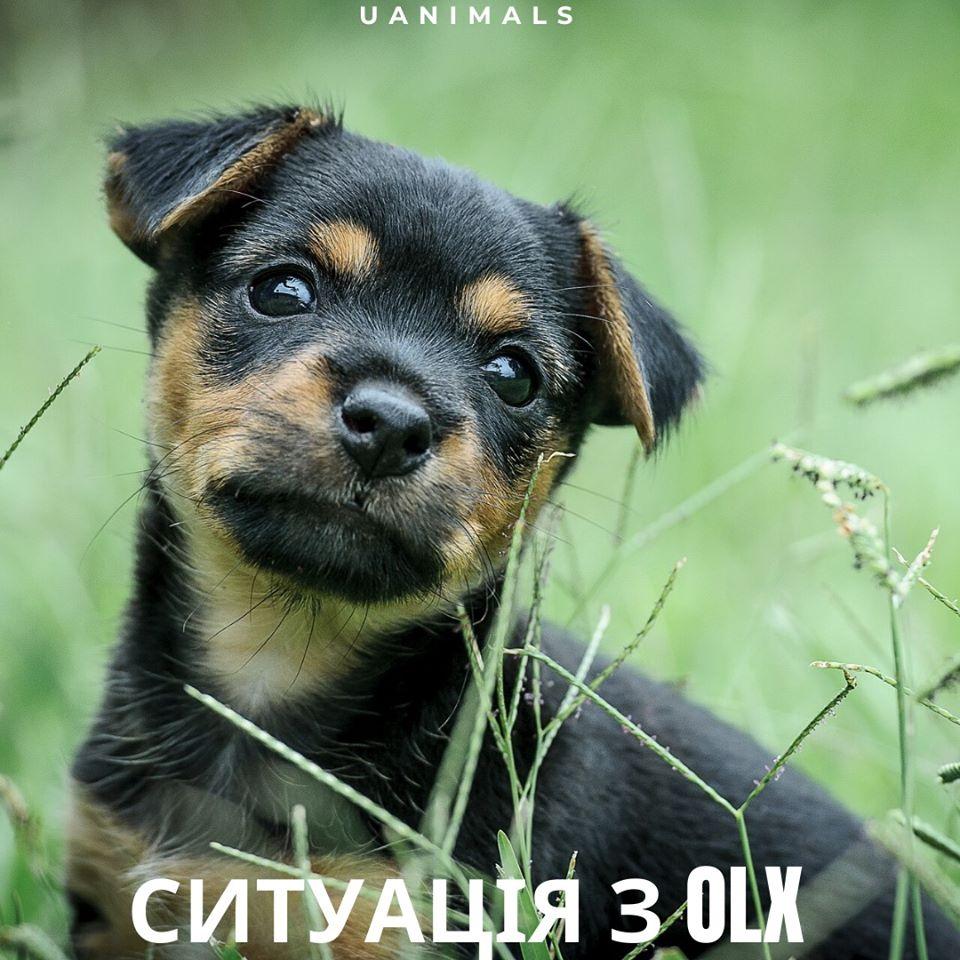 Плануємо ввести нові правила, – OLX. Чим завершилася історія з оголошеннями про оренду собак? - коронавірус, карантин - 09 tvaryny