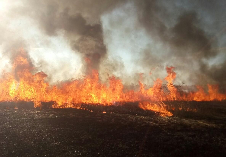 50 тисяч штрафу за спалювання трави: на сайті президента з'явилась петиція - петиція - 1 1