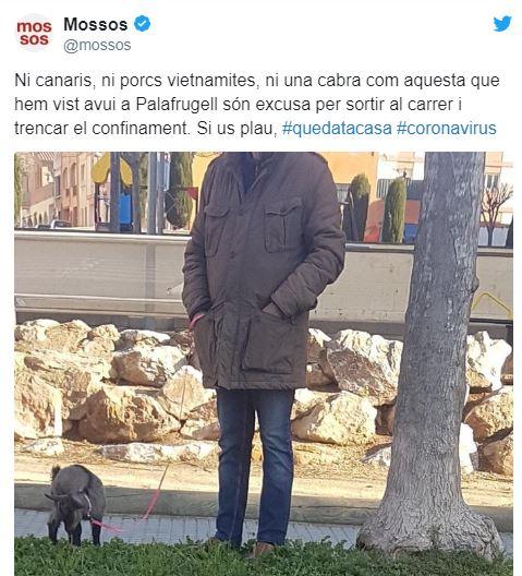 Коза, іграшковий пес, курка, краб і риба: кого вигулюють на карантині іспанці -  - 1