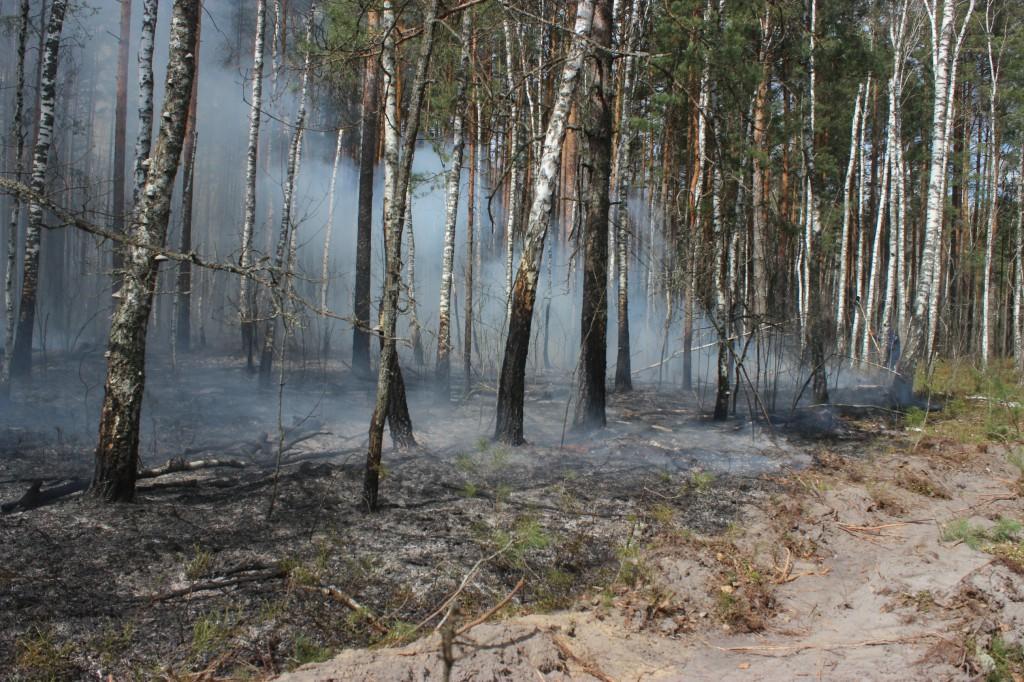 Продукти горіння із Зони відчуження вітер переміщує на західні райони Київщини -  - 10248