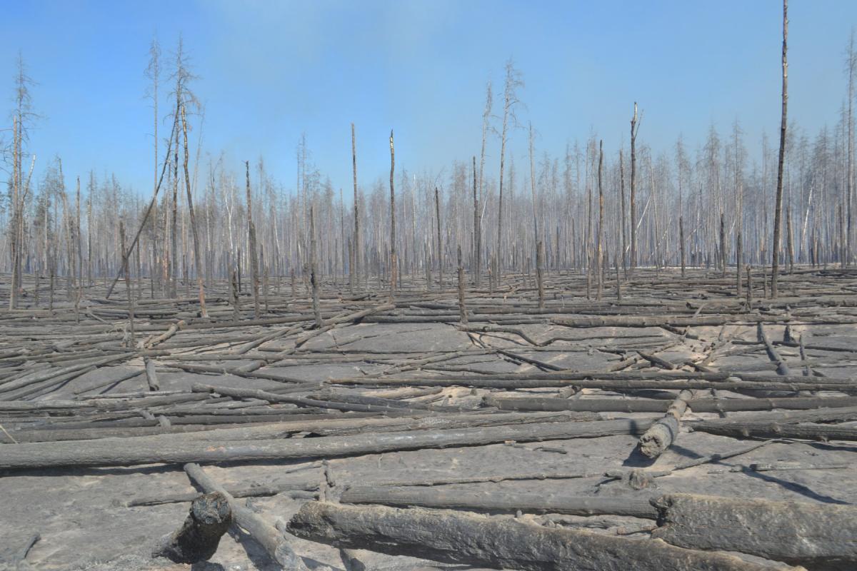 У Чорнобилі вже більше тижня гасять ліс: авіація скинула 240 тонн води - Чорнобильська зона - 12 chernobyl3