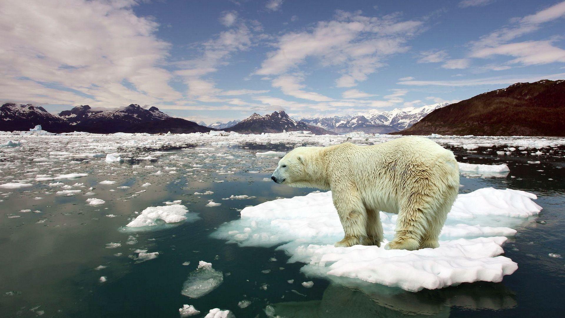 Через 10 років планету чекає різке скорочення біорізноманіття - Тварини, глобальні зміни клімату - 13 zmina klimatu