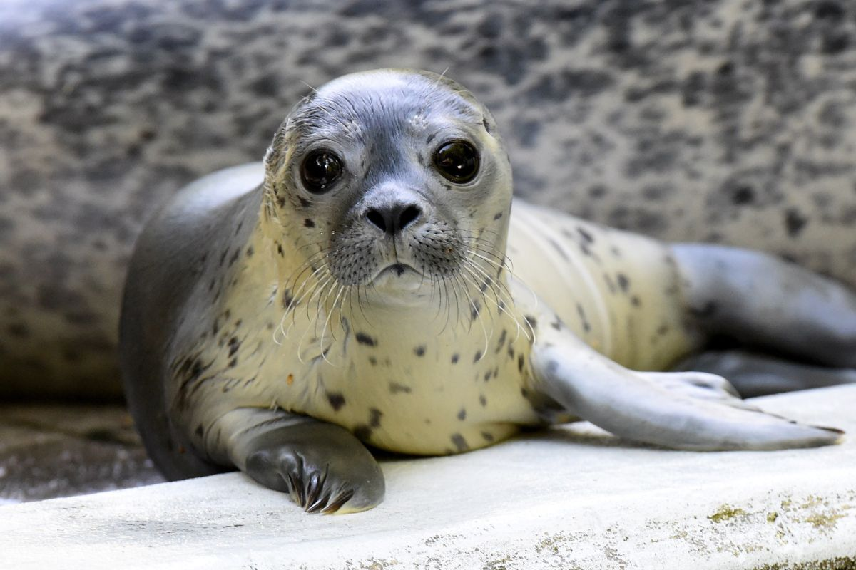 Коронавірус: через брак коштів зоопарк в Німеччині може згодувати одних тварин іншим - Тварини, Німеччина, коронавірус - 15 zoo