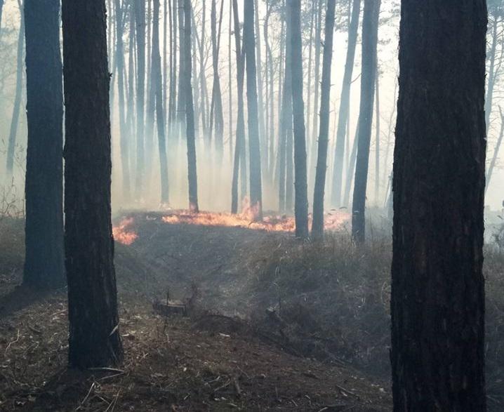 Підпал трави спричинив пожежу у Голосіївському парку: постраждали тварини (ФОТО 18+) - Тварини, Голосіївський парк - 16 goloseevo
