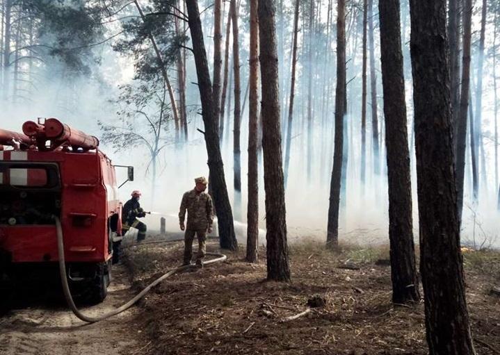 Підпал трави спричинив пожежу у Голосіївському парку: постраждали тварини (ФОТО 18+) - Тварини, Голосіївський парк - 16 goloseevo3
