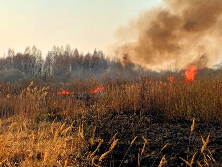 На Бородянщині весь день гасили пожежу: горіло 30 га сухостою, чагарників та хвойних дерев (ФОТО і ВІДЕО) - пожежа, Пилиповичі, Бородянський район - 2 1