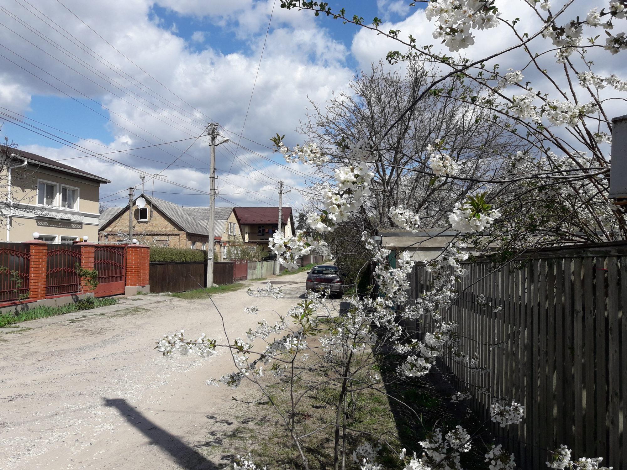 Ірпінь квітне: у місті настає пік цвітіння дерев та кущів (ФОТО) -  - 20200427 122021 2000x1500