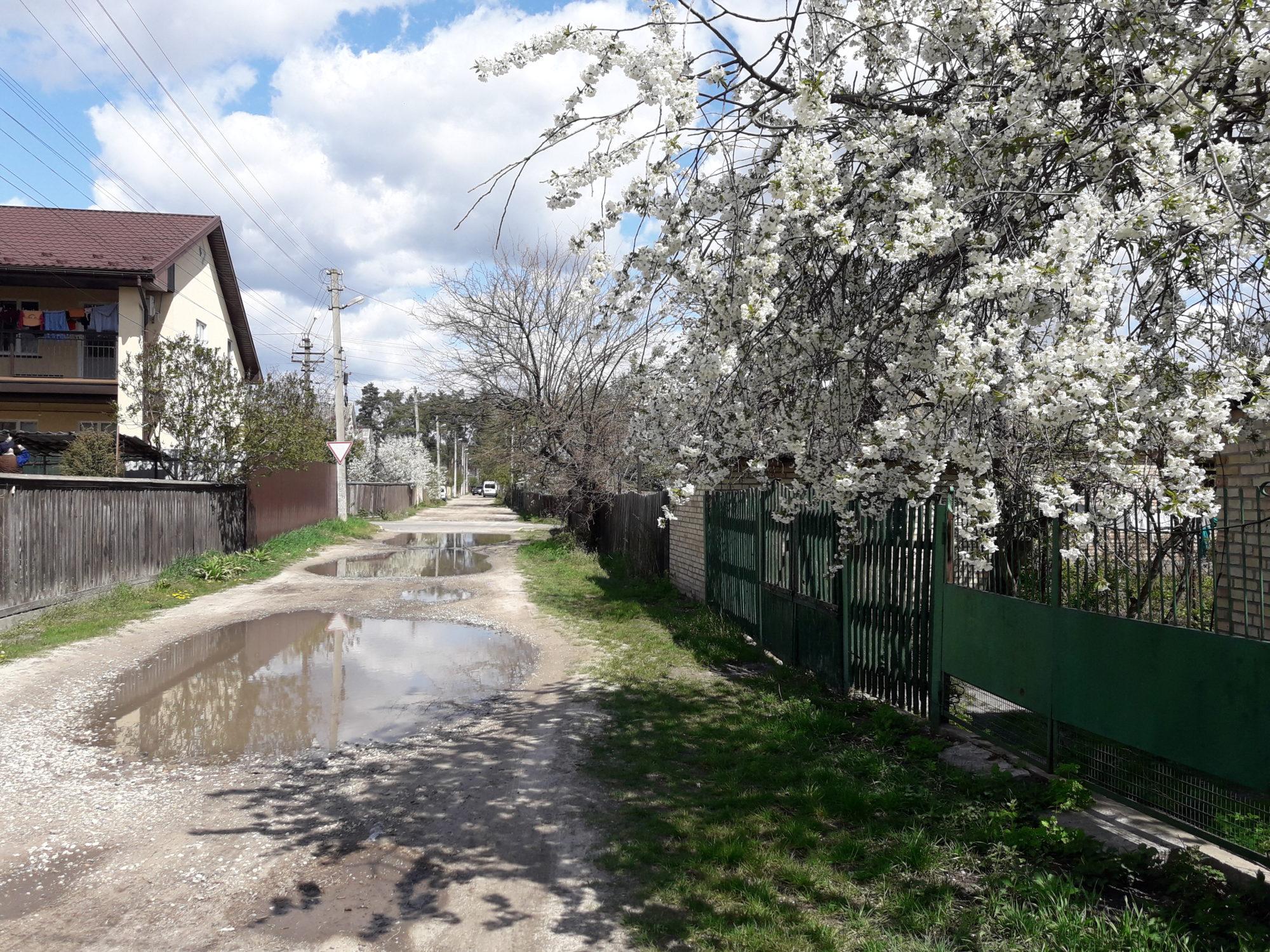 Ірпінь квітне: у місті настає пік цвітіння дерев та кущів (ФОТО) -  - 20200427 122233 2000x1500