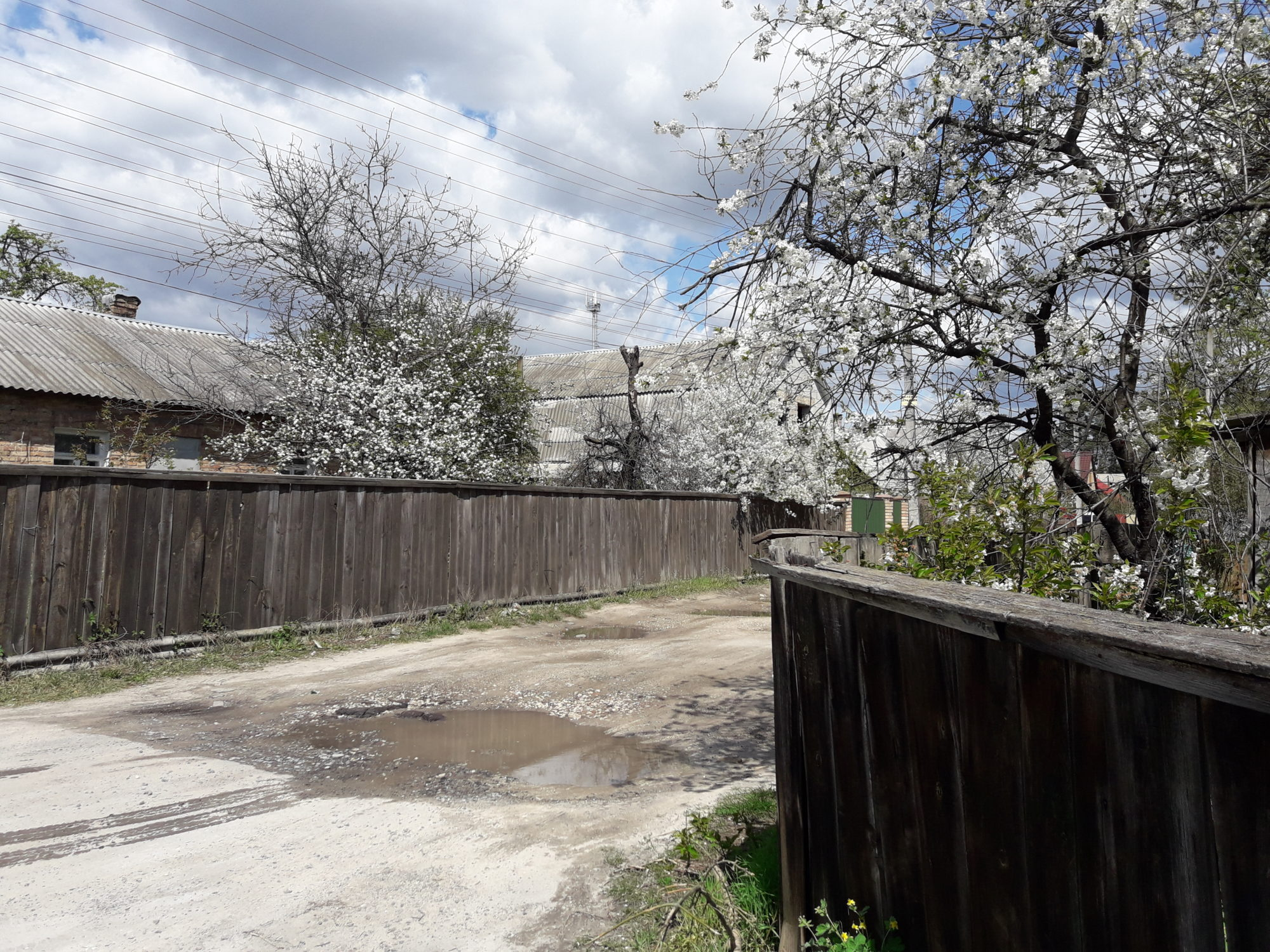 Ірпінь квітне: у місті настає пік цвітіння дерев та кущів (ФОТО) -  - 20200427 122431 2000x1500
