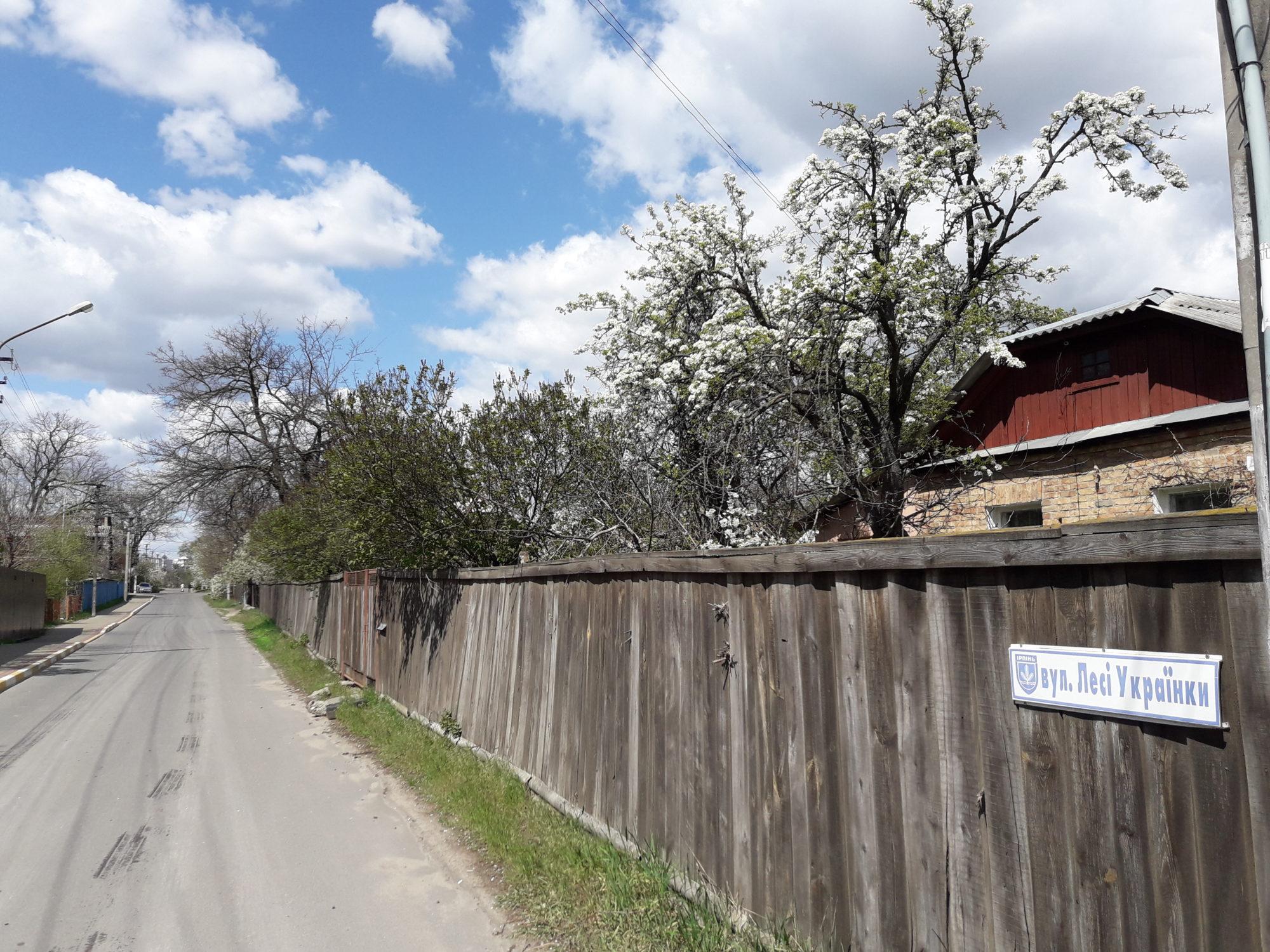 Ірпінь квітне: у місті настає пік цвітіння дерев та кущів (ФОТО) -  - 20200427 122445 2000x1500