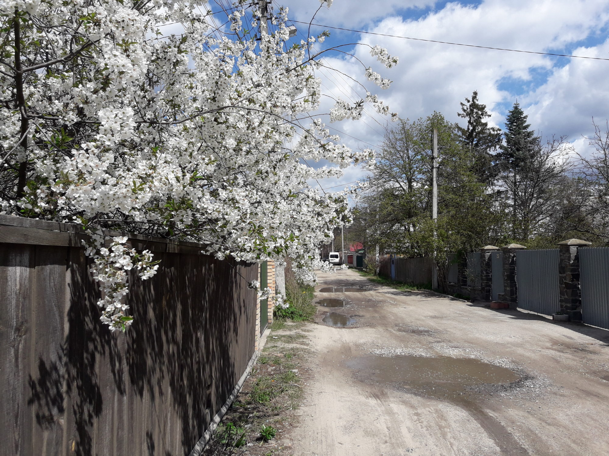 Ірпінь квітне: у місті настає пік цвітіння дерев та кущів (ФОТО) -  - 20200427 122515 2000x1500