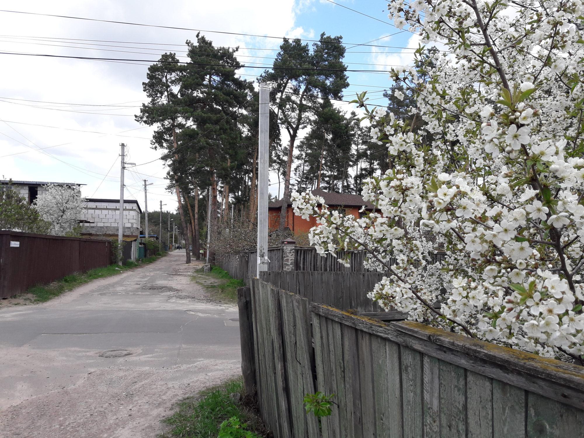Ірпінь квітне: у місті настає пік цвітіння дерев та кущів (ФОТО) -  - 20200427 123305 2000x1500