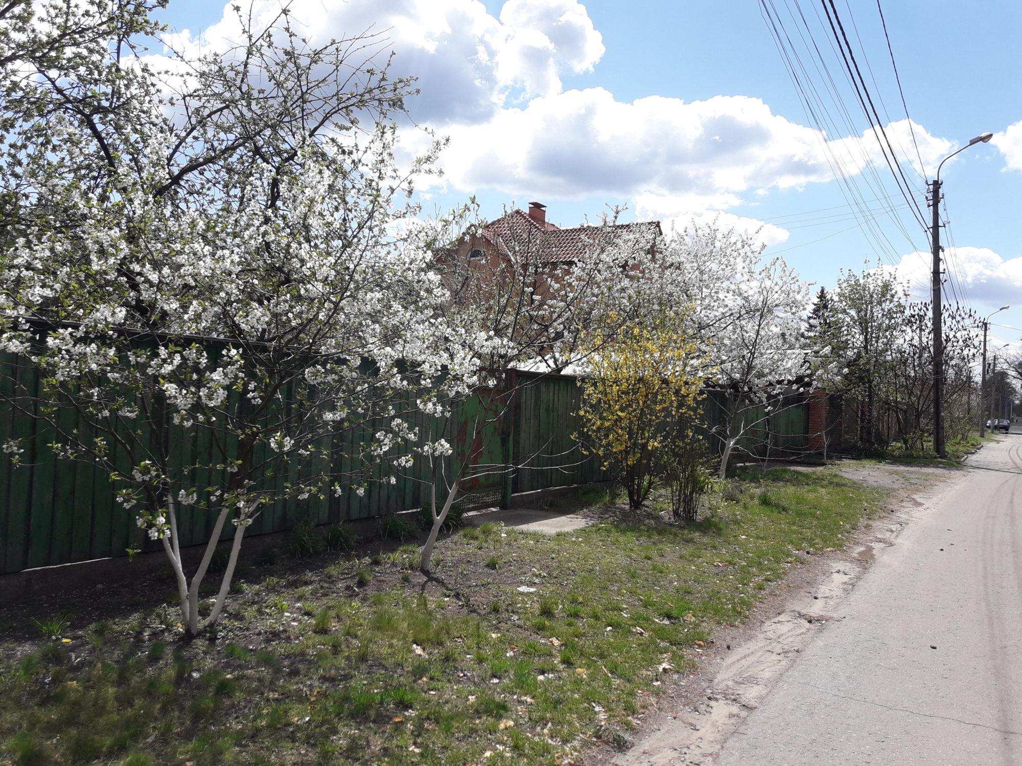 Ірпінь квітне: у місті настає пік цвітіння дерев та кущів (ФОТО) -  - 20200427 123539 2000x1500