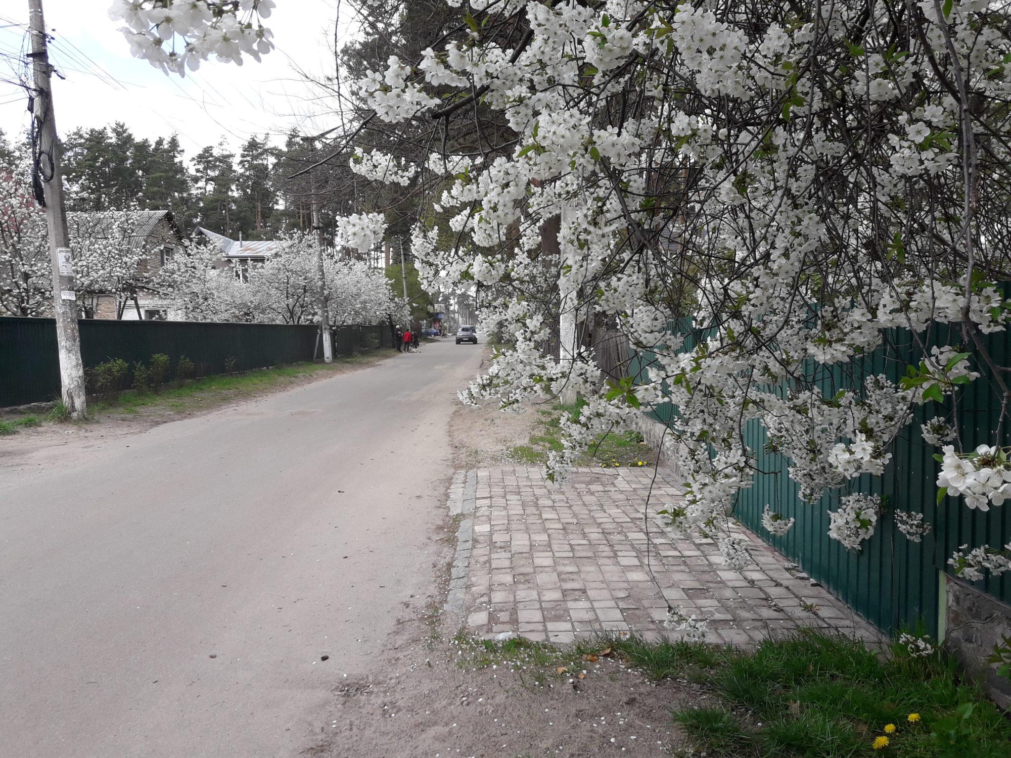 Ірпінь квітне: у місті настає пік цвітіння дерев та кущів (ФОТО) -  - 20200427 123821 2000x1500