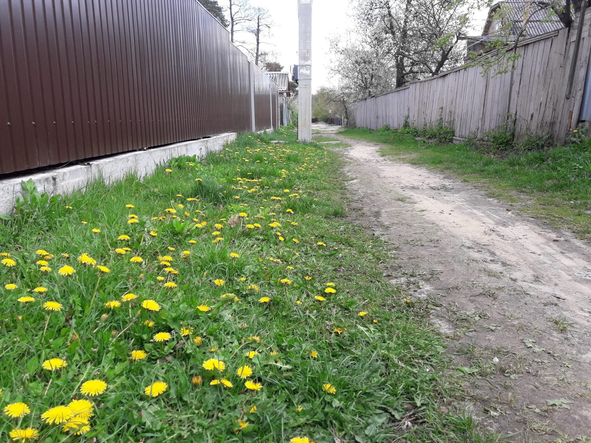Ірпінь квітне: у місті настає пік цвітіння дерев та кущів (ФОТО) -  - 20200427 135616 2000x1500