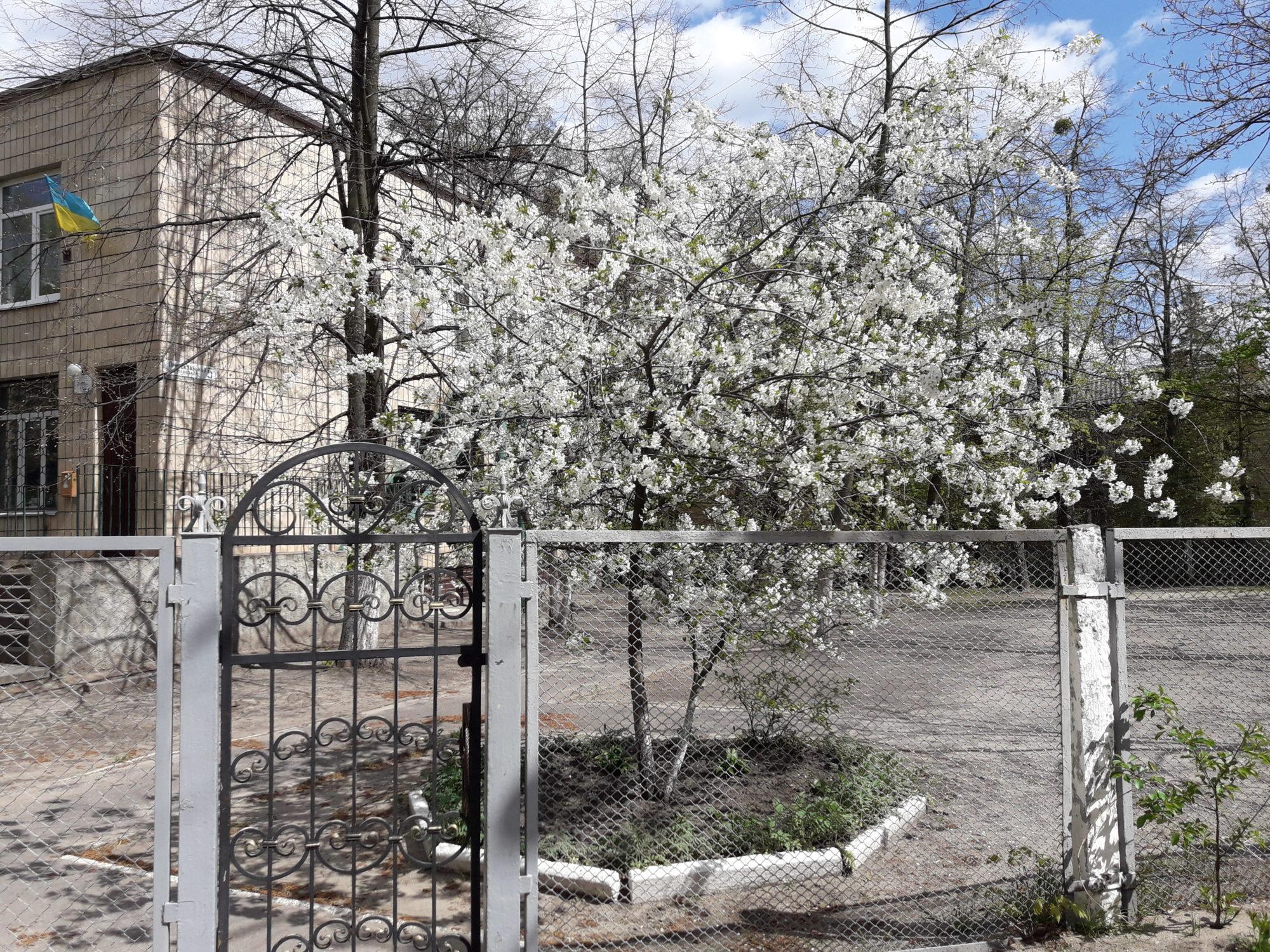 Ірпінь квітне: у місті настає пік цвітіння дерев та кущів (ФОТО) -  - 20200427 140850 2000x1500