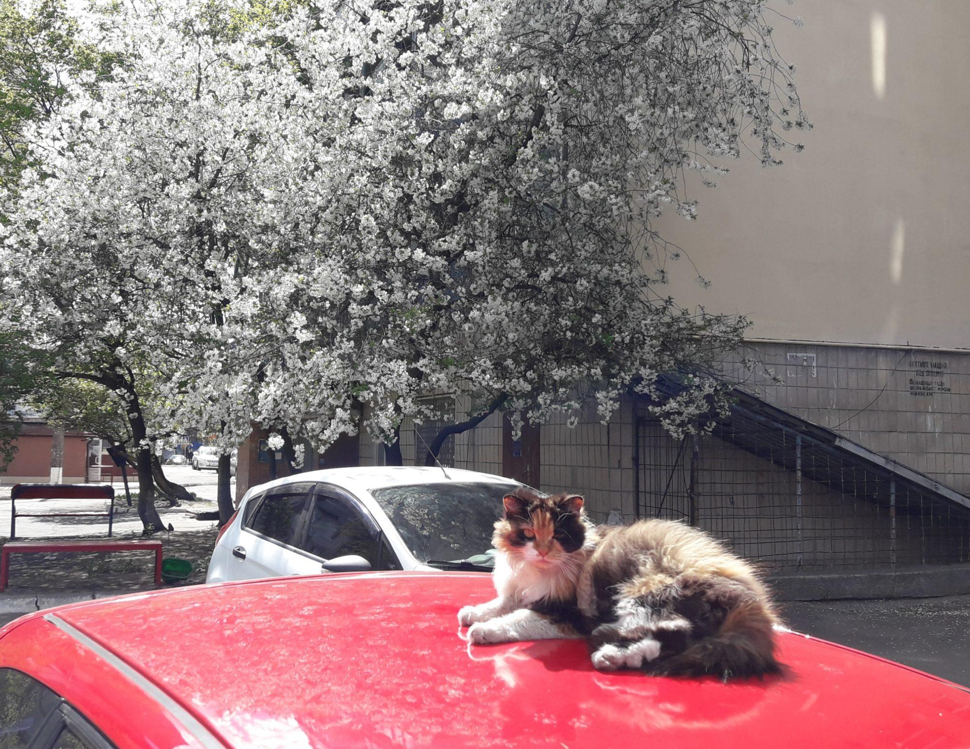 Ірпінь квітне: у місті настає пік цвітіння дерев та кущів (ФОТО) -  - 20200427 211119 2000x1545