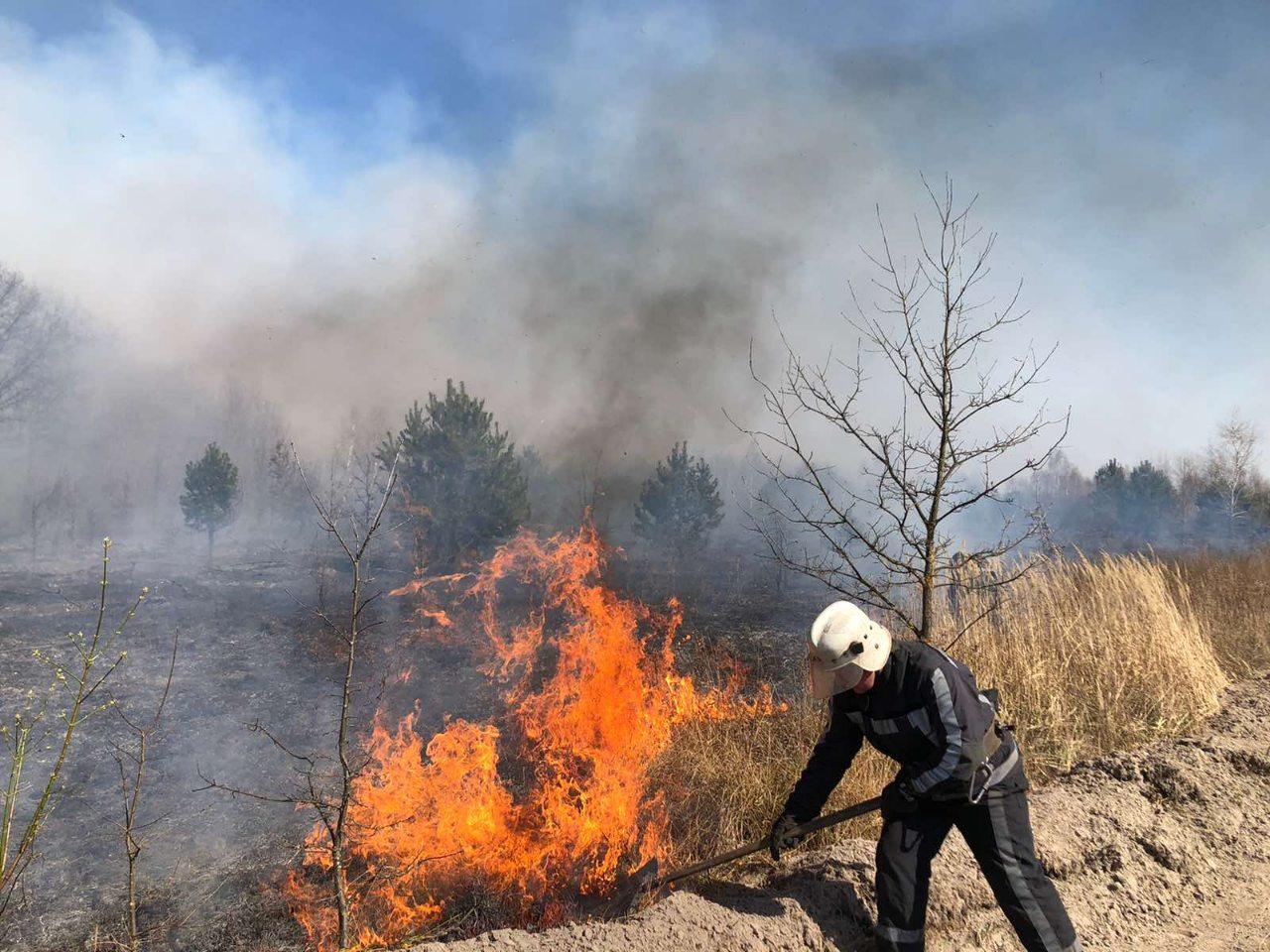 Спалював сміття – загорівся ліс: палієві на Київщині загрожує до 5 років позбавлення волі - пожежа - 24 pozhezha