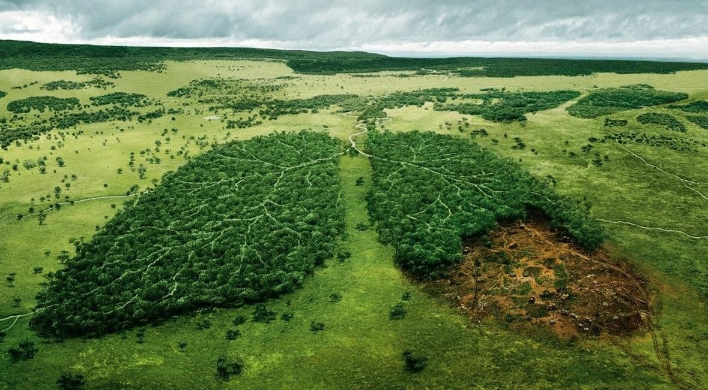 На сайті Президента з'явилася петиція про створення екологічної поліції - петиція - 28 petytsyya2