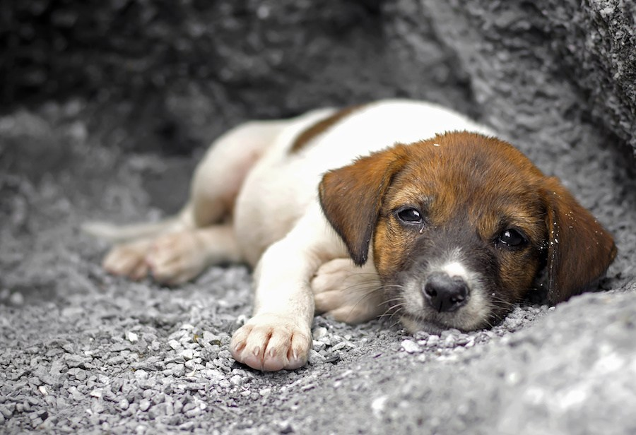 Що робити, якщо ви зустріли безпритульну тварину: поради фахівців - зоозахисники - 29 sobaka