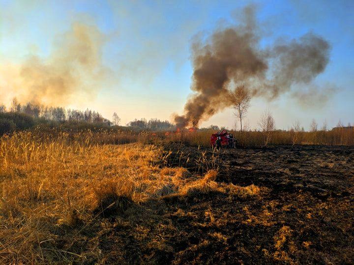 На Бородянщині весь день гасили пожежу: горіло 30 га сухостою, чагарників та хвойних дерев (ФОТО і ВІДЕО) - пожежа, Пилиповичі, Бородянський район - 4 1