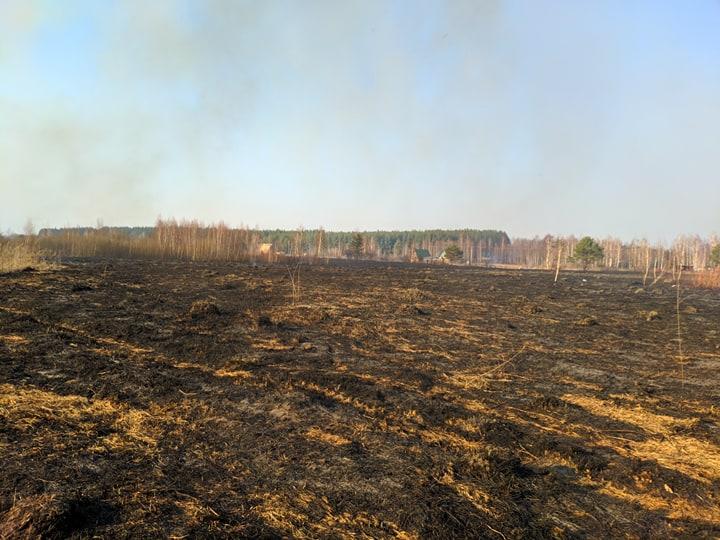 На Бородянщині весь день гасили пожежу: горіло 30 га сухостою, чагарників та хвойних дерев (ФОТО і ВІДЕО) - пожежа, Пилиповичі, Бородянський район - 5