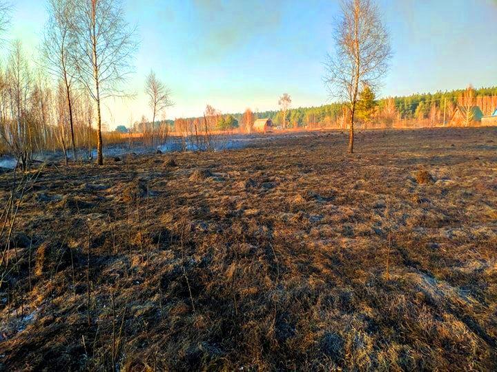 На Бородянщині весь день гасили пожежу: горіло 30 га сухостою, чагарників та хвойних дерев (ФОТО і ВІДЕО) - пожежа, Пилиповичі, Бородянський район - 7