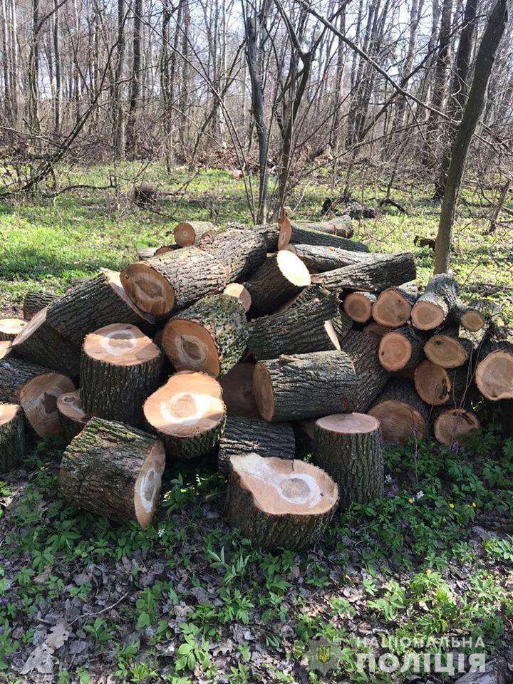На Переяславщині оштрафували чоловіків за незаконну вирубку дерев -  - 91315457 2888187457903074 7302667012885446656 o