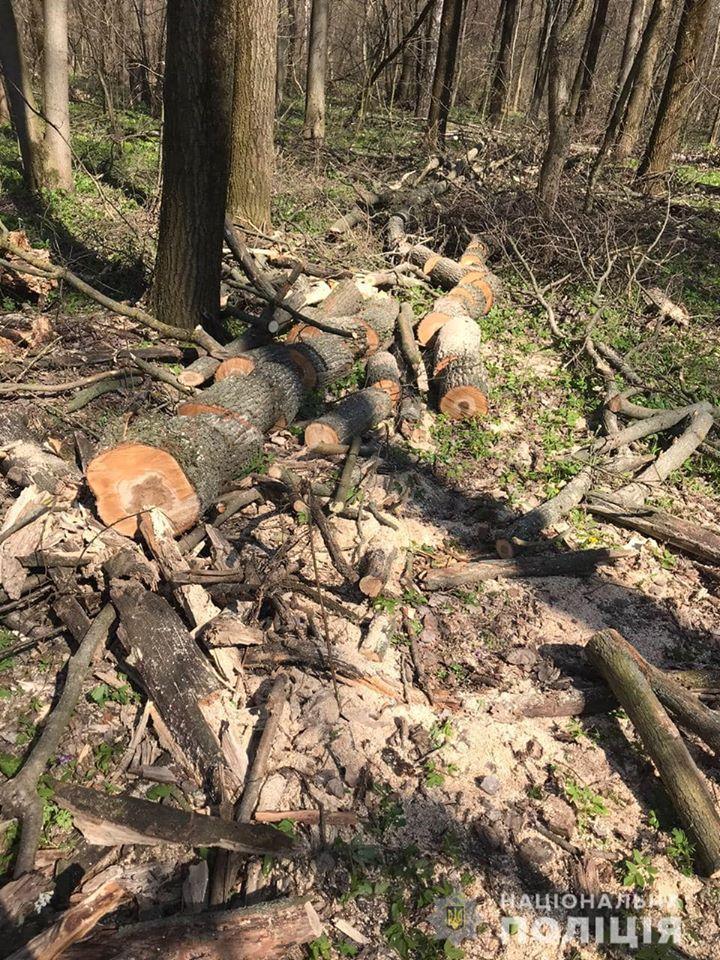 На Переяславщині оштрафували чоловіків за незаконну вирубку дерев -  - 91990364 2888187541236399 1000256922135298048 o